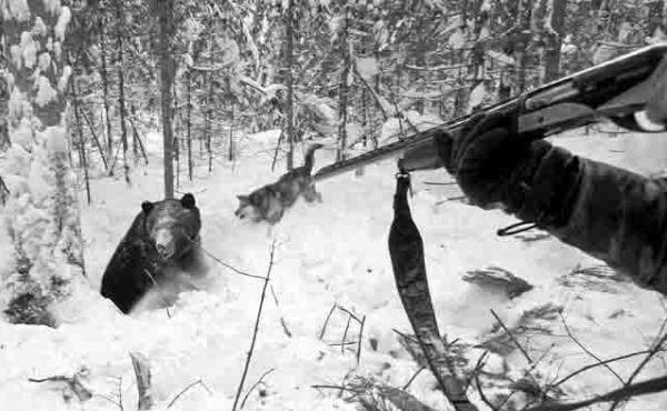 Медведь вылезает из берлоги