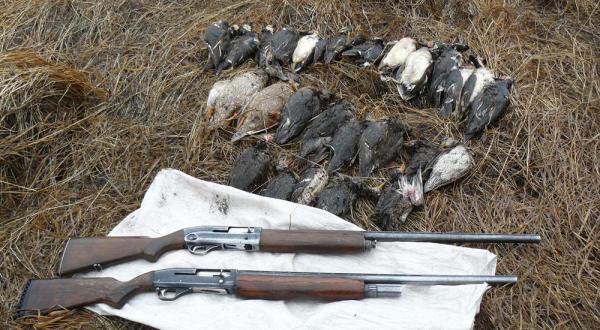 Охота в коллективе