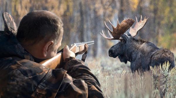 Охотник целится в животное