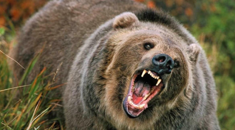 Правила охоты на медведя